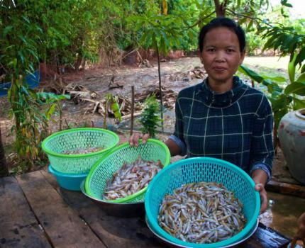 Small Fish Powder helps Children Grow